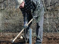 Planting the ground